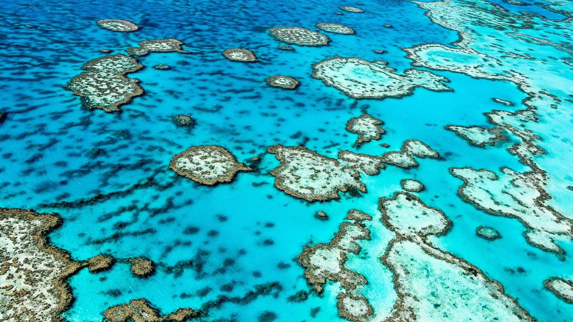 Protect trees to save our reef