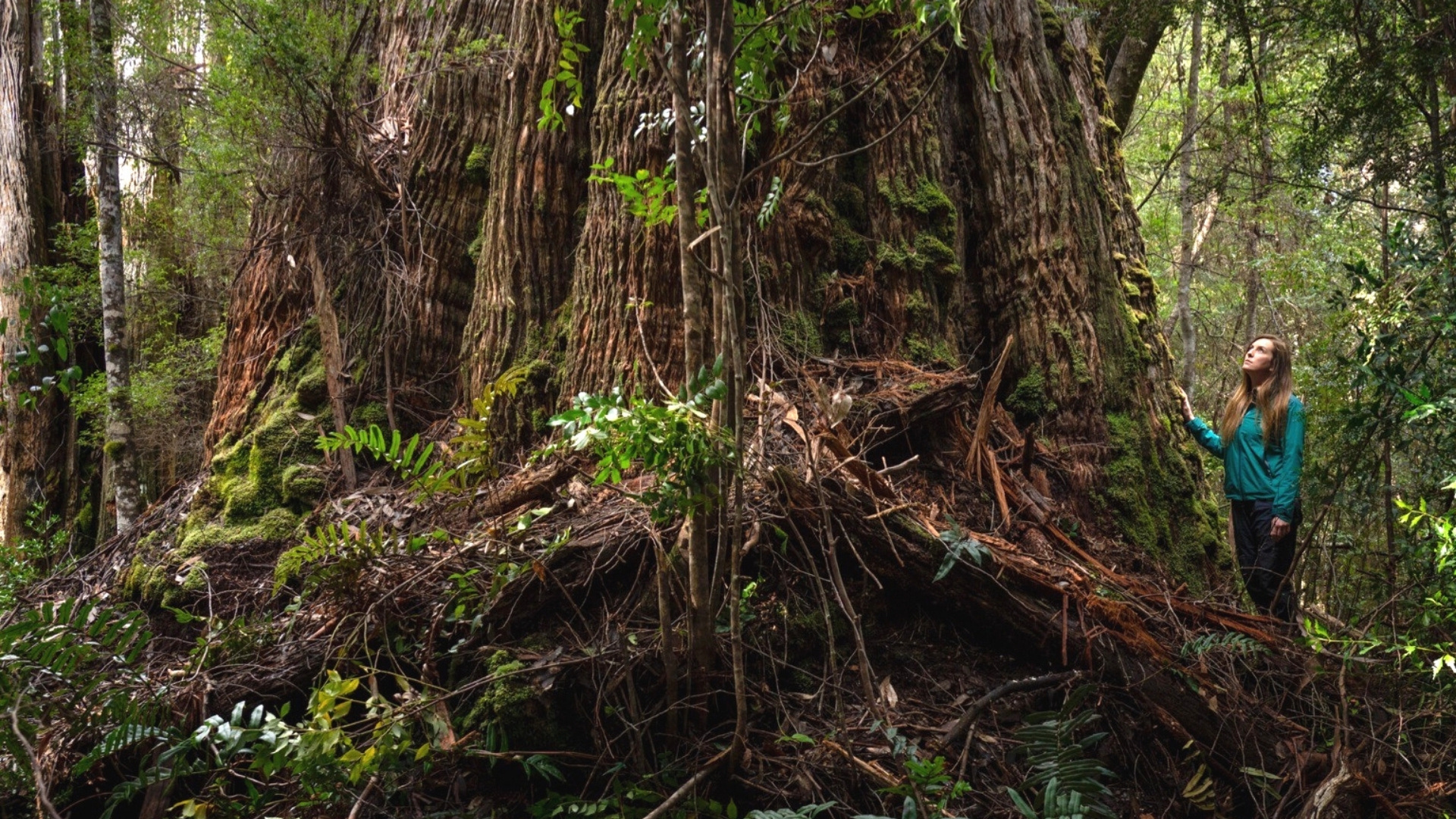 Together, we can protect Tasmania's forests