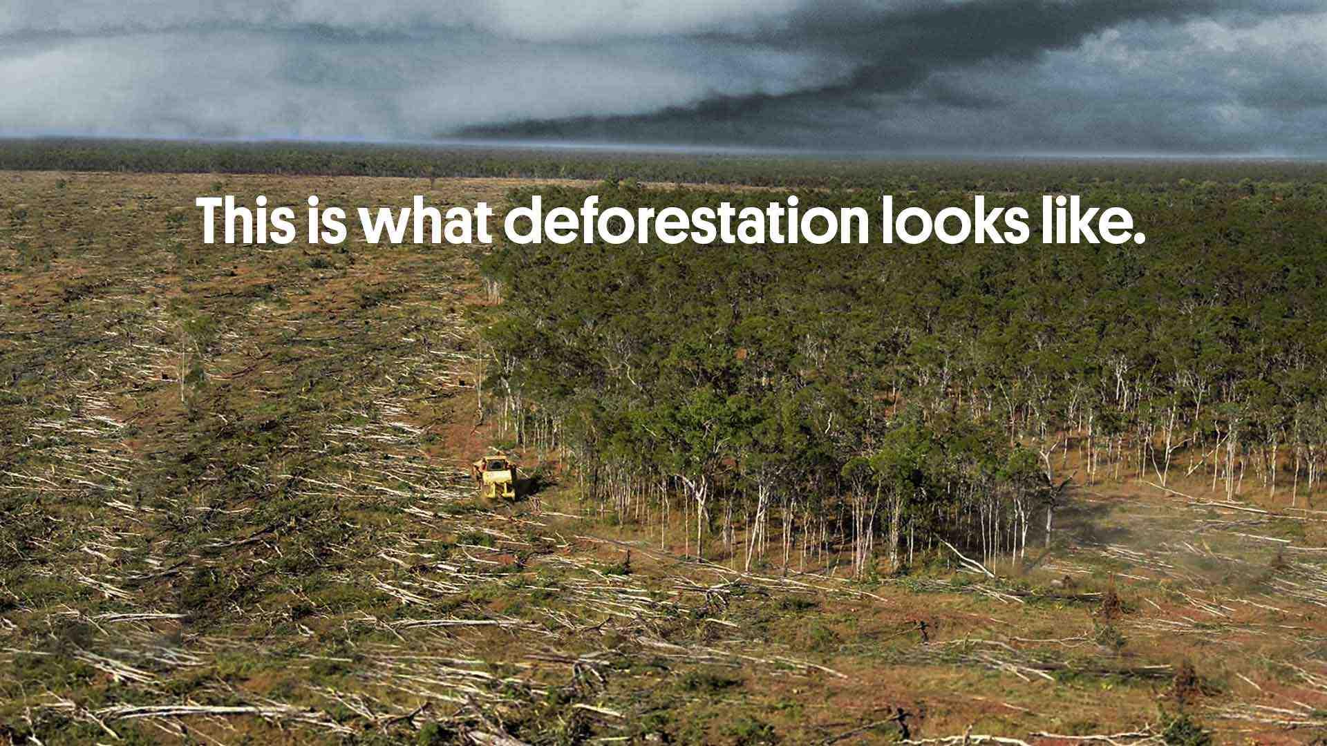 deforestation wilderness society