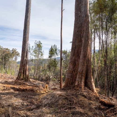 An analysis of the Regional Forestry Agreements
