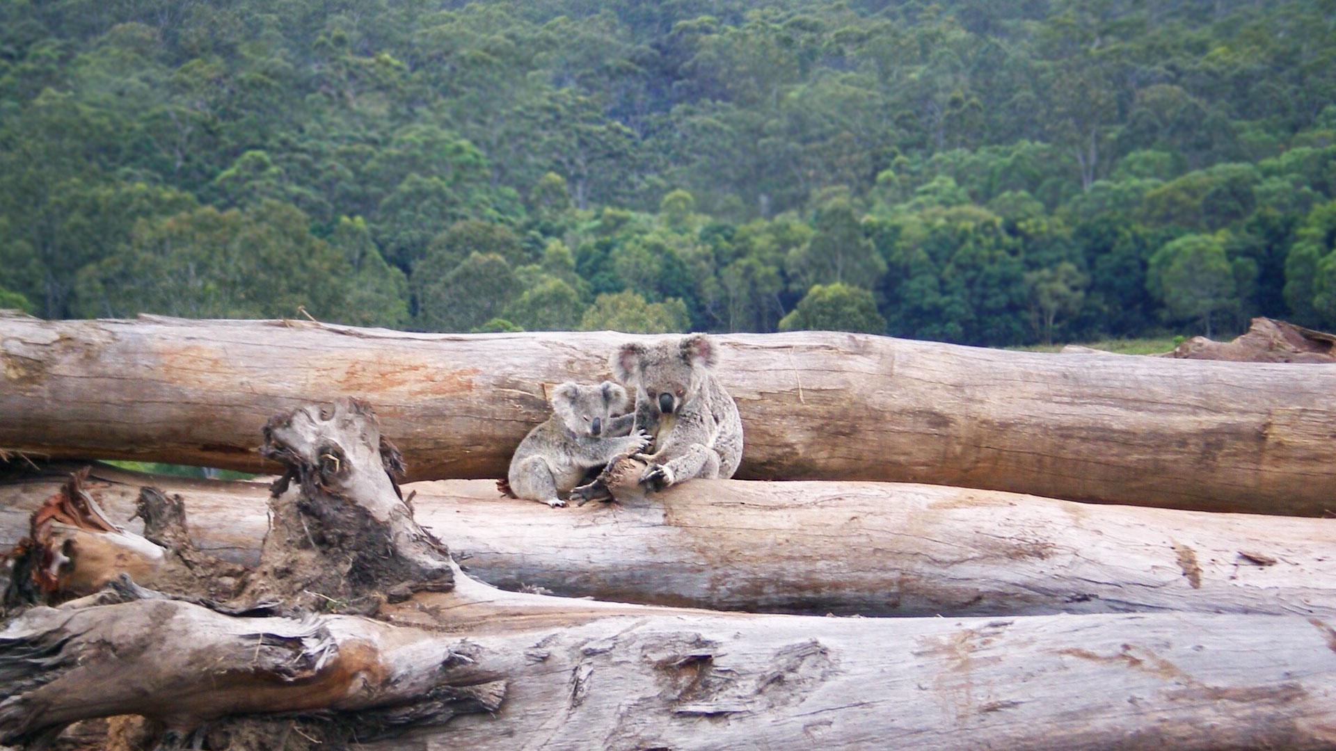 Stop deforestation now