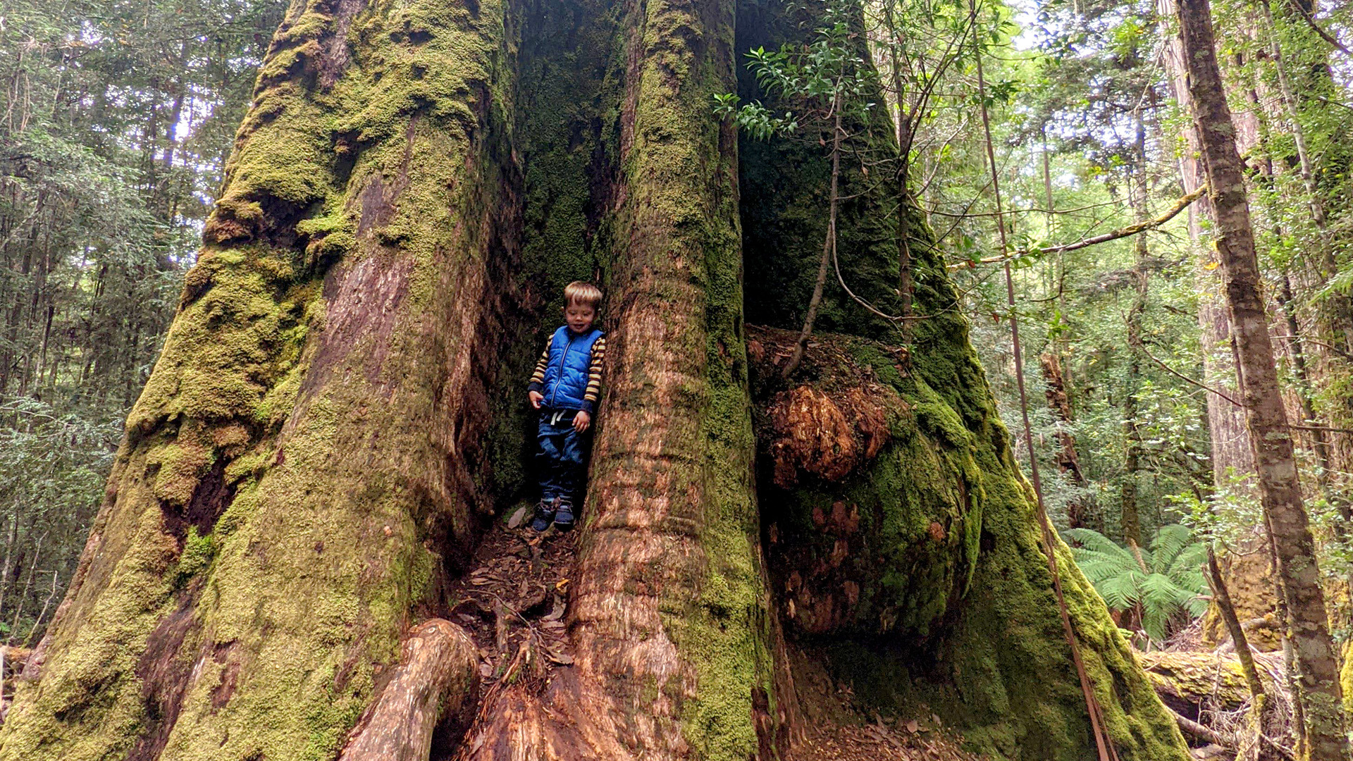 Protect the ancient forests for our future