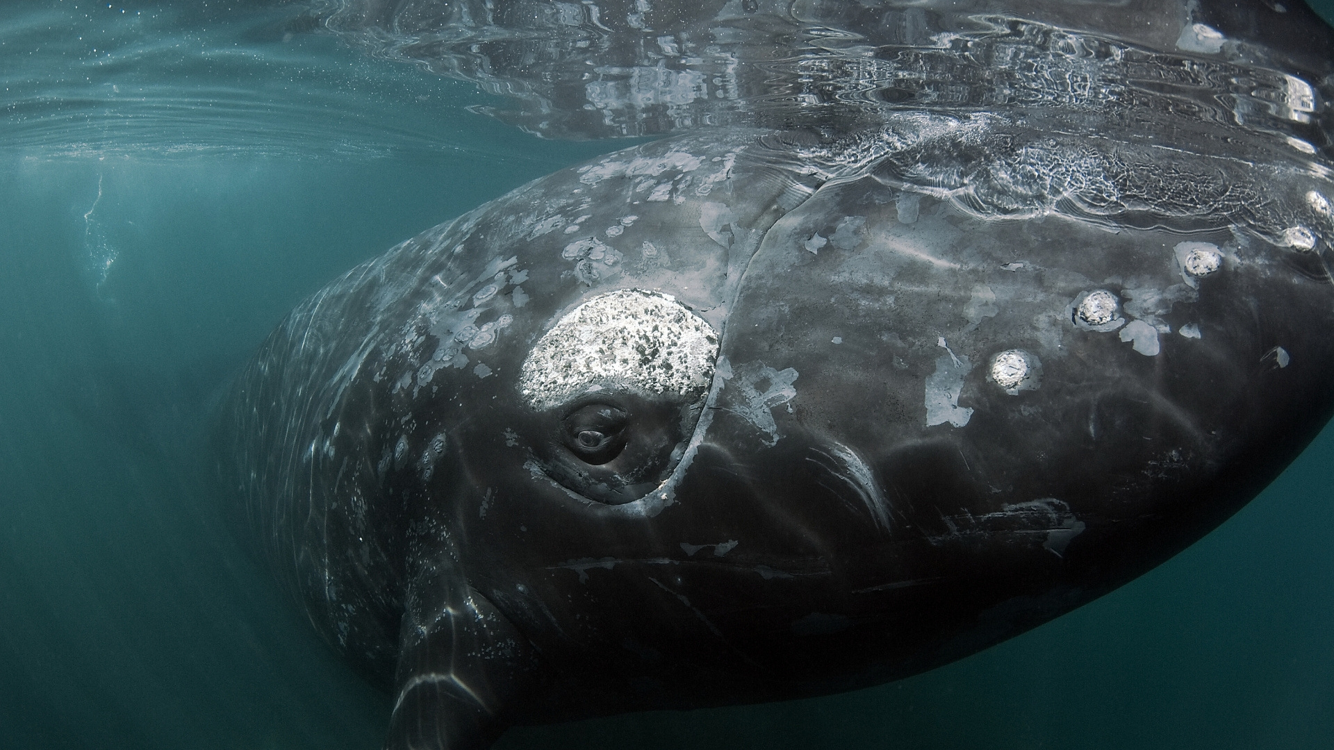 Happy World Whale Day!